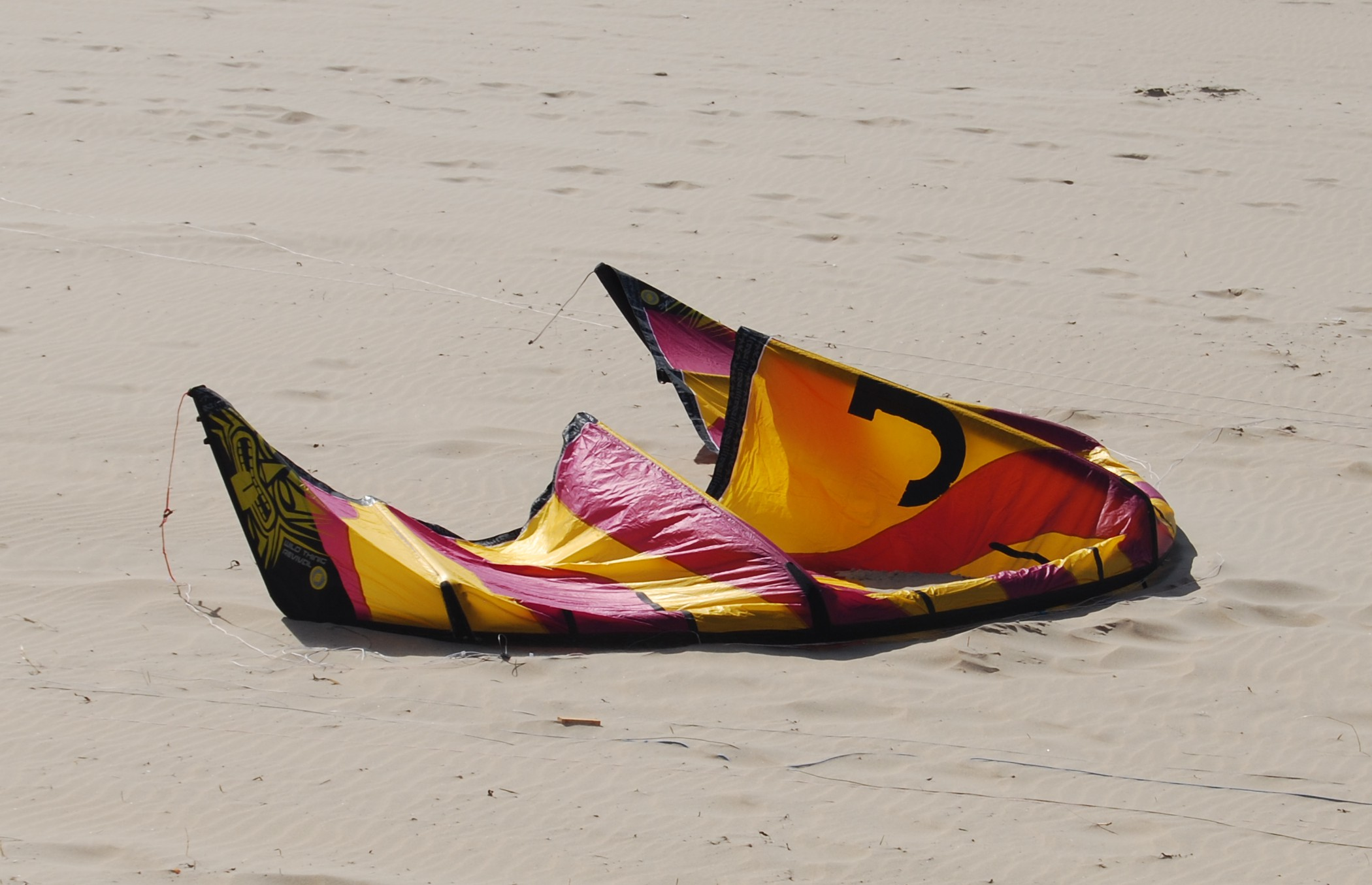 Wild Thing Revival V